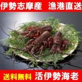 〜写真は調理例を含みます。3尾で撮影しております。〜   伊勢海老といえば三重県です。県の魚にも指定...