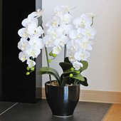 ■光触媒胡蝶蘭、造花(光の楽園)胡蝶蘭セリースWは、お部屋のアクセントや空間に彩りを添え、空気をキレ...