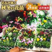 季節の花苗を6種類以上24個入れた花苗24個セットです  ・冬以降も2019年4月頃まで十分楽しめる...