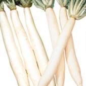 夏から秋にかけてまく代表的なたくあん用品種です。葉はやや淡緑色で横に広がり、根は純白で長く、中央部が...