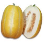 菊メロンと黄マクワの雑種から育成された特徴的なマクワウリ。 果面に浅い縦溝があり、果形は整った俵形。...