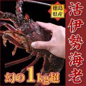 カテゴリ(15442):食品>魚介類、海産物>伊勢エビ   超巨大伊勢海老 1kgオーバー  年に数...