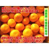 減農薬・有機肥料栽培で大切に育てました♪ 夏目漱石の小説の舞台にもなったミカンの名産地 熊本県天水町...