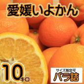 全国生産量No.1を誇るここ愛媛県にてせいぶ青果が販売する「愛媛いよかん」は 非常に香りがよく、ジュ...