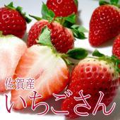 つやつやとした外観、苺らしい形、かわいい苺がデビューしました!佐賀県の新品種「いちごさん」は、「さが...