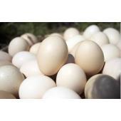 おおいた烏骨鶏は、鶏の健康管理と卵の衛生管理のため、ケージ飼いをしています。  おおいた烏骨鶏卵は未...