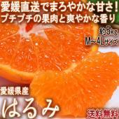 ◆食べ易さとプチプチとした食感に爽やかな風味「はるみ」  はるみは1999年に品種登録されたタンゴー...