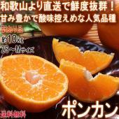 ◆インド原産の柑橘「ポンカン」  ポンカンは明治29年に鹿児島県に伝来した柑橘です。名前の由来はポン...