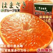 ◆佐賀の柑橘〜麗紅種の頂点、はまさき〜  はまさきは平成22年5月28日に商標登録がされた麗紅という...