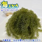 沖縄県産の海ぶどう(タレ付き)。化粧箱なし、業務用としてもどうぞ。 「海ぶどう」はビタミンやカルシウ...