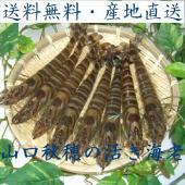 山口県秋穂産の活き車エビを産地直送でお届けいたします。 *12月以外の日曜日・祝日の出荷は行いません...