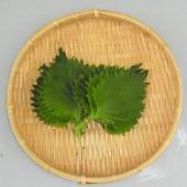 主に山口県産、福岡県産を主とする西日本産 大葉です。