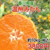香川県産の甘くてジューシーな温州みかん 甘さと、ほどよい酸味を味わうことができます。 ※大きさに多少...
